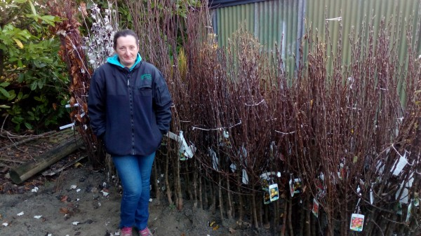 Bare Root Fruit Trees from Dunwiley Nurseries Ltd., Dunwiley, Stranorlar, Co. Donegal, Ireland.