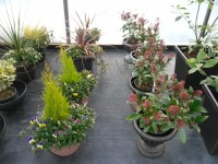 Decorative Pots from Dunwiley Nurseries & Garden Centre, Stranorlar, Co.Donegal